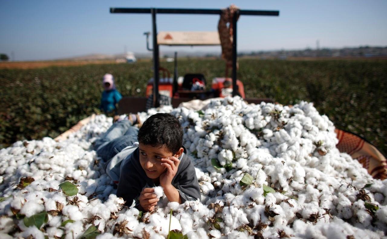 Siria: Estrategia para cultivo del algodón y sistema de pago electrónico de servicios públicos