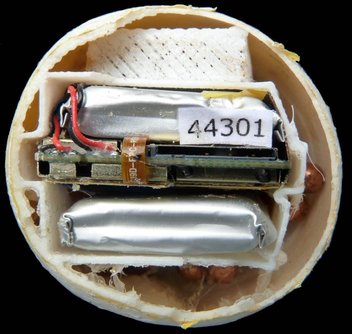 Detalle del interior del huevo artificial con GPS. (Foto: Helen Pheasey)