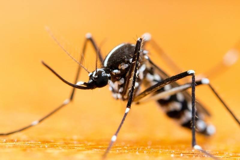 ¿Cómo viajan los mosquitos?