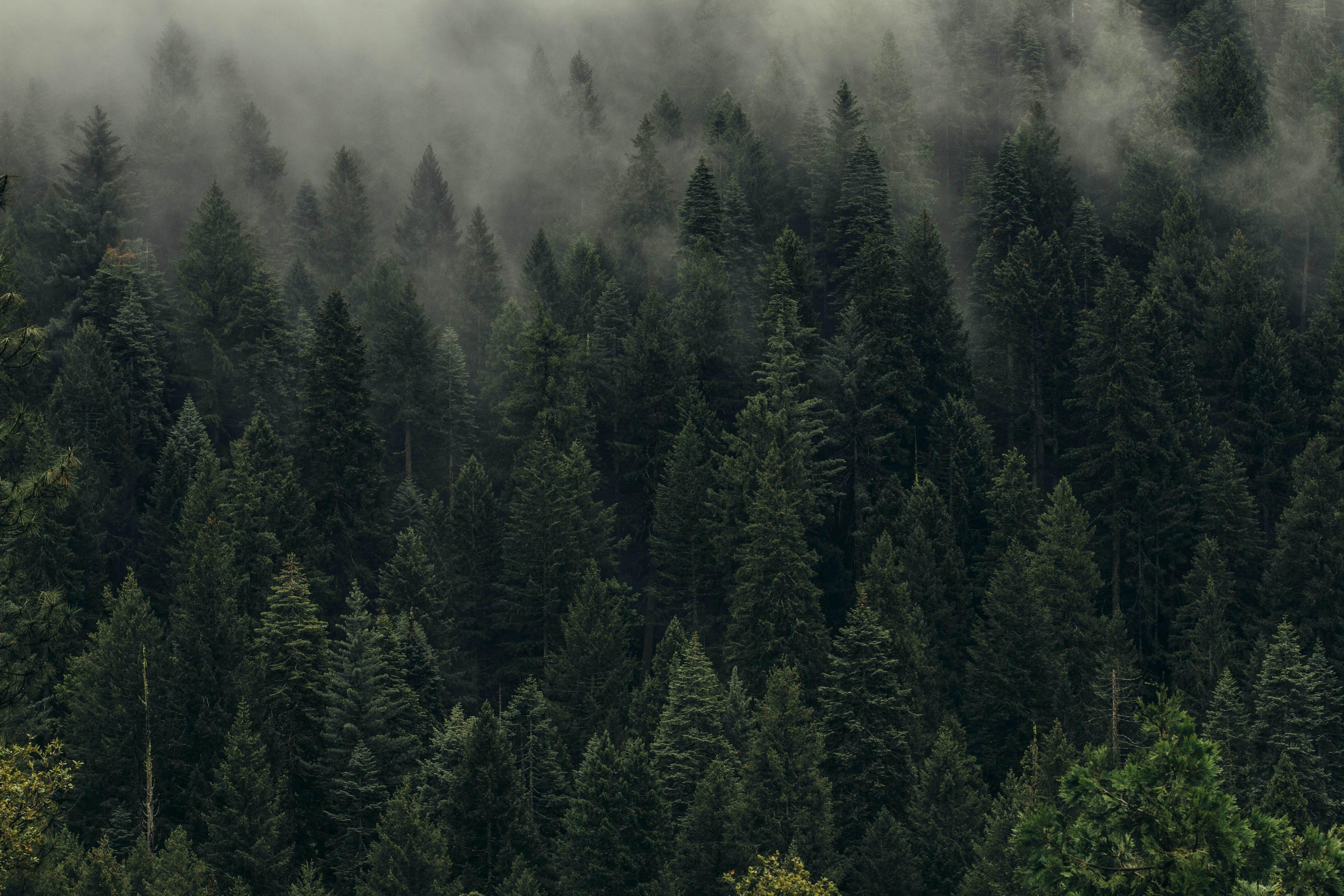Cómo podemos salvar los bosques entre todos (Foto: Dan Otis, Unsplash)