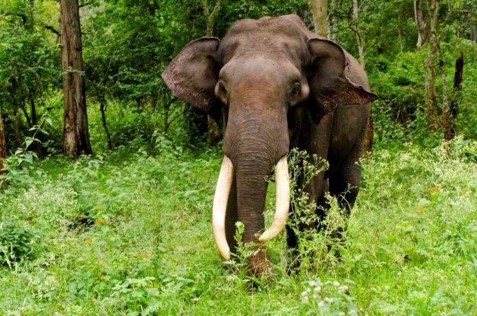 La sexta extinción masiva, la extinción de muchos mamíferos