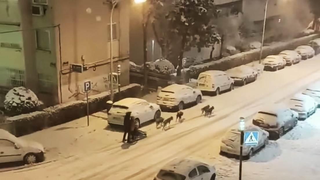 Un trineo tirado por perros en las calles de Madrid